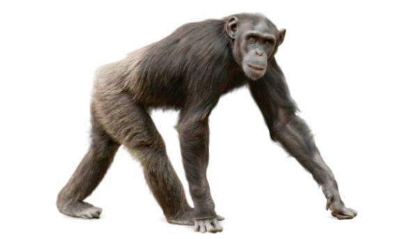 evolution and God?